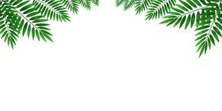 棕榈树叶子在白色背景的 装饰和文字文本的板料 库存图片