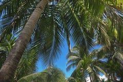 棕榈树叶子热带植物 免版税库存图片