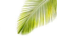 棕榈树叶子由阳光的 图库摄影
