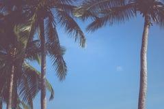 棕榈树叶子背景白色和黑纹理剪影,增殖比 库存照片