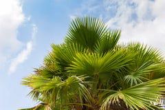 棕榈树叶子 库存图片