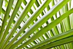 棕榈树叶子 库存照片