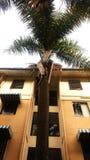 棕榈树叶状体  免版税库存图片