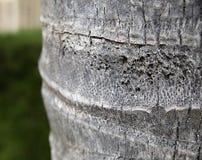 棕榈树吠声纹理  免版税库存照片