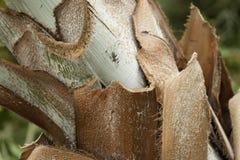 棕榈树吠声 免版税库存图片