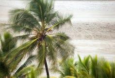 棕榈树吹由一阵强风 库存图片