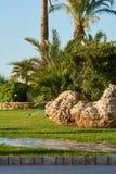 棕榈树和一块大石头在草坪在一个公园在罗得岛,希腊海岛上  免版税库存照片