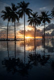 棕榈树和五颜六色的日落 库存照片