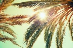 棕榈树和光亮的太阳在明亮的天空 免版税库存图片