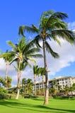 棕榈树和公寓房,毛伊 免版税库存图片