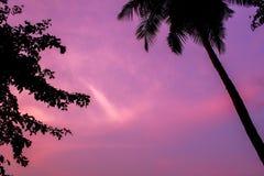棕榈树和叶子黑剪影在桃红色紫色日落天空 免版税图库摄影