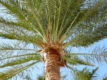 棕榈树和叶子 免版税库存图片