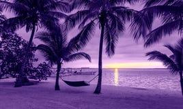 棕榈树和吊床在热带海滩 免版税库存照片