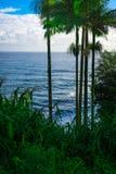 棕榈树和在夏威夷采取的海洋 免版税库存图片