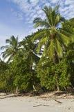 在Playa Manuel Antonio的棕榈树 免版税库存照片