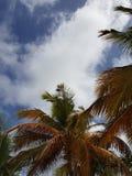 棕榈树和夏天微风 库存照片