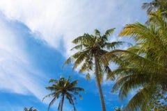 棕榈树和多云天空热带海岛照片 晴朗的异乎寻常的夏天卡片 免版税库存图片