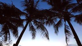 棕榈树和天空在一个短的热带晚上的日落 免版税库存照片