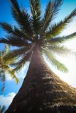棕榈树和天空的由下往上的看法 库存图片