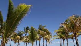 棕榈树和天空蔚蓝宽射击  股票录像
