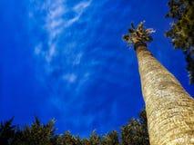棕榈树和天空蔚蓝,在热带海岸,被定调子和被传统化的葡萄酒的棕榈树,椰子,清楚的夏天天空 免版税库存图片
