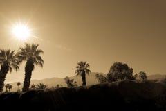 棕榈树和山 免版税库存照片