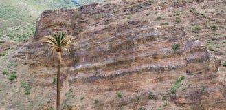 棕榈树和岩石面孔 库存图片