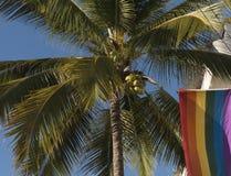 棕榈树和彩虹旗子 免版税库存照片