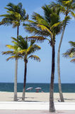 棕榈树和日光浴者海滩的 库存照片