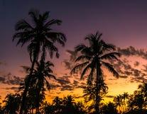 棕榈树和日落在果阿 免版税库存照片