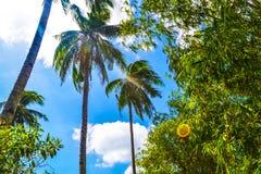棕榈树和明亮的蓝天美妙的看法  天堂手段El Nido巴拉望岛菲律宾 免版税图库摄影