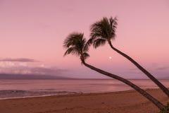 棕榈树和月亮在日出 免版税库存照片