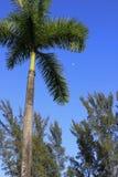棕榈树和月亮 库存照片
