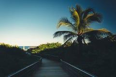 棕榈树和木板走道道路向海滩在歌手海岛,弗洛尔 库存图片