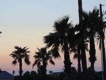 棕榈树和桃红色天空在得克萨斯沿岸航行在微明 免版税图库摄影
