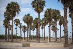 棕榈树和沙滩 库存图片