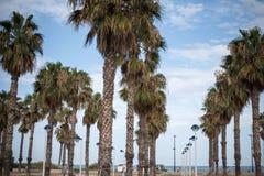棕榈树和沙滩 免版税库存照片