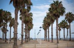 棕榈树和沙滩 免版税库存图片
