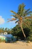 棕榈树和海滩咖啡馆 免版税库存照片
