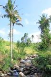棕榈树和瀑布 免版税库存图片