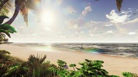棕榈树和热带植物分支风的在日出 美好的夏天圈背景 影视素材
