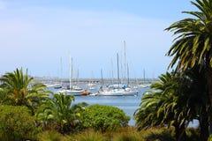 棕榈树和白色游艇在海湾 库存图片