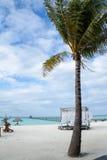 棕榈树和眺望台在海滩 库存照片