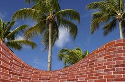 棕榈树和砖墙伪造品 库存照片
