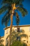 棕榈树和老房子在芒通 库存照片