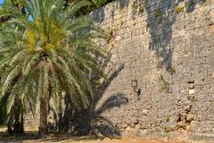 棕榈树和老石墙 库存照片