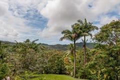 棕榈树和花在花森林植物园, Barbad里 免版税库存图片
