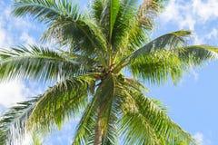 棕榈树和蓝天热带海岛照片 晴朗的异乎寻常的夏天卡片 免版税库存照片
