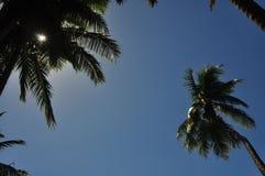 棕榈树和蓝天看法  免版税库存照片