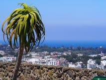 棕榈树和视图从Castello Aragonese坐骨的海岛,意大利 免版税库存图片